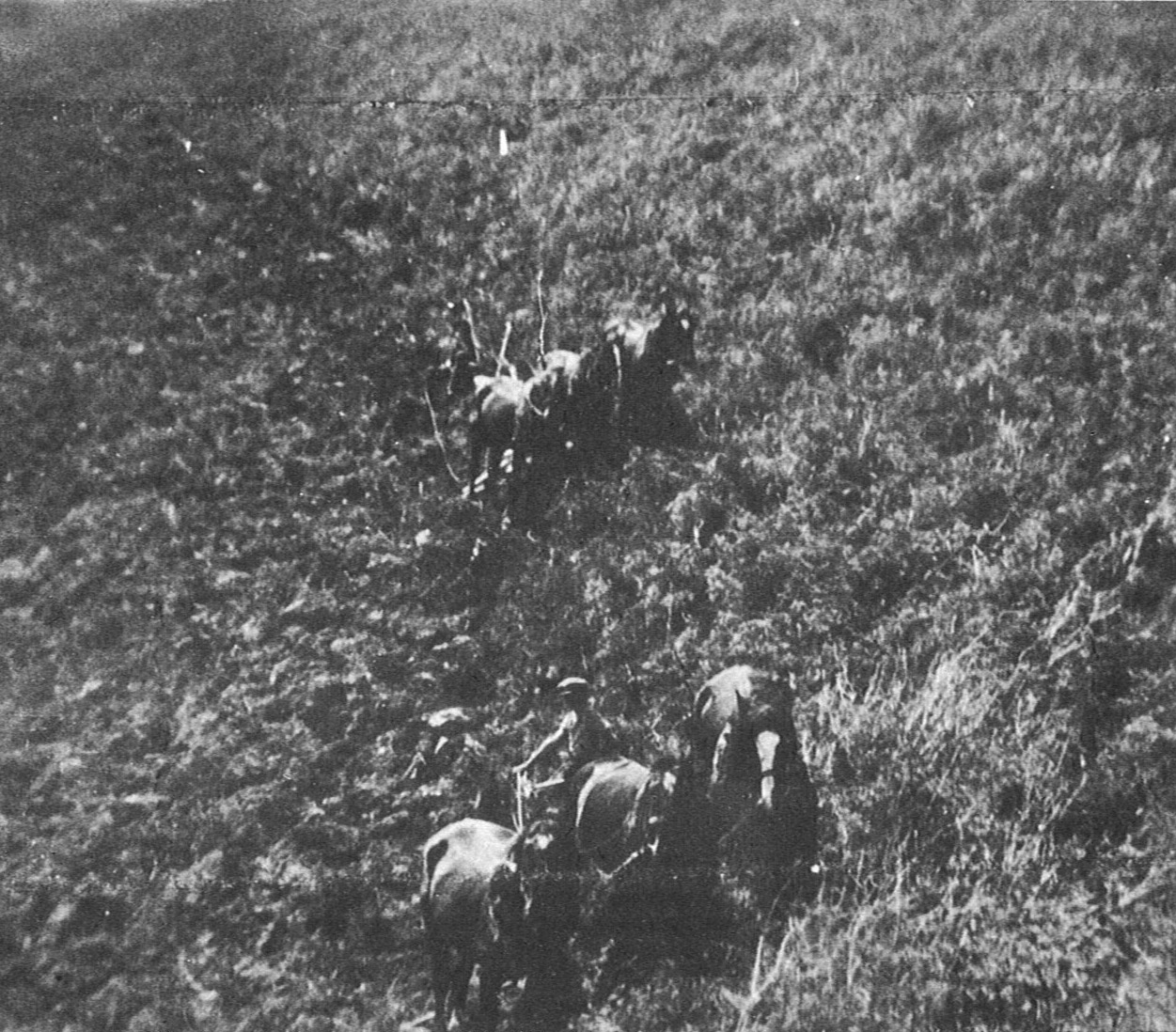 Ploughing Chitty's Hill, 1920's.